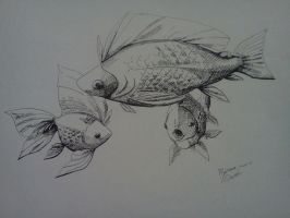 Fish,fish,fish by Quila-Quila