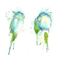 Budgies II Preening by amwah