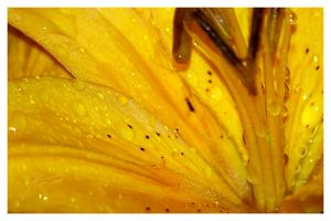 Drops Of Yellow by janey-in-a-bottle