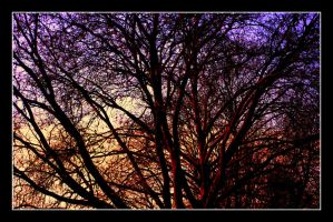 Lonesome trees 3 by garbo009