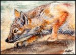 ACEO : Corsac Fox by Nanook94