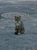 Homeless cat by SwaEgo