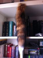 Tail Possibly for Sale by Jiel
