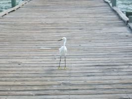 The Snowy Egret by EtheriumProject