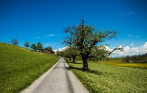 allee (kinda) by crazyswisscow