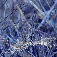 Blue Diamond Web by miroslav-petrinec