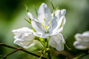 Simple White by DGPhotographyjax