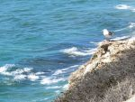 The Seagull and the Waves by ShipperTrish