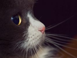 Just another cat shot by mv79