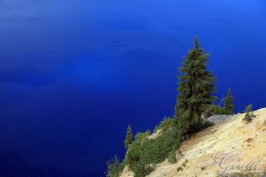 Crater Lake Tree by ThisWomanWanders