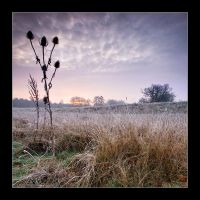 Frost and Thistles by henroben