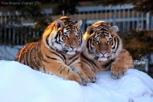 Brother and Sister by Sagittor