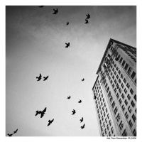 Fly by vietkatthroughlense