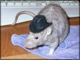 Rats in Hats - Cowgirl Mocha by angelratdesigns