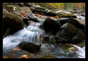 Stereotypical Fall Photograph by FoxMcCarther