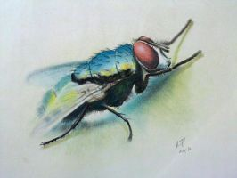 The Fly by ronnietucker
