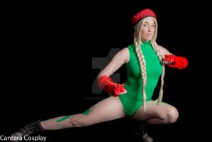 Micro kitty cammy 5 by CanteraImage