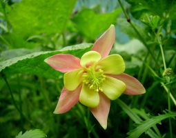 Columbine by Slowlydying