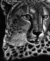 Scratchboard Cheetah by ArtKayz