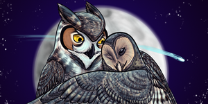 Woha's Owl Duo by Nyctra