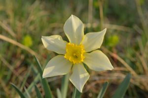 Amazing flower by albyper84