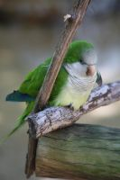 Little green bird by Lightningflickr