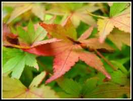 The beginning of autumn by plhu