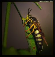 Waiting for the Sun by boron