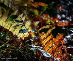 Autumn Ferns by abstractcamera