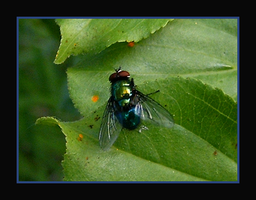 Super Mighty Fly by jwall77