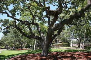 Neverland Giving Tree by TellMeWhereItHurts