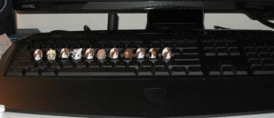 Theres guinea pigs on my keyboard! by insanable