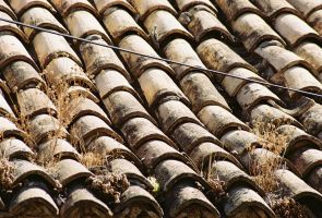 the old (botanical) roof by Wilma1989