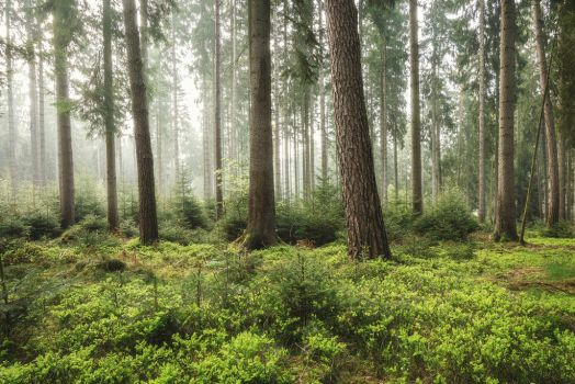 Spring Forest by artmobe