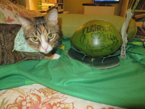 The Roaming Coconut - Back Home with Cat by ameraucanablues