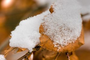 Snow crystals on autumn leaf by duncan-blues