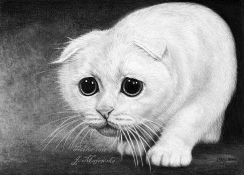Poor kitty... by titol87