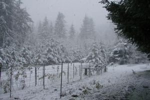 December Snow 2008 13 by Ozzyhelter