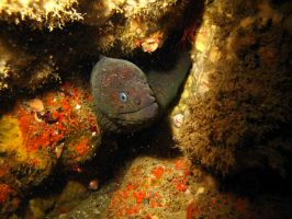 The Domain of the Moray Eel by X5-442