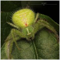 Green Devil by Metkan