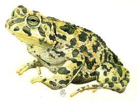 Pencil Colours Frog by araeld