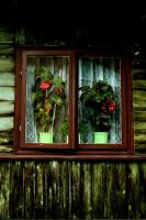 green window by CannonCat