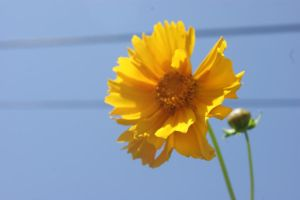 Yellow Flower by WoodenOx