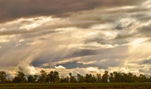 AFTER THE RAIN by zootnik