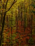 Wonderful Autumn IV by Life-For-Sale