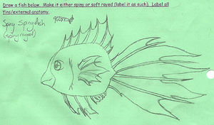 Draw a Fish: Spiny SpinyFish by NobodysWanderingSoul