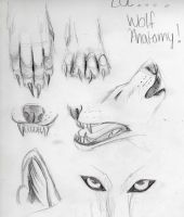 LOL wolf anatomy 101 by Lucky978