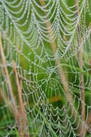 Spiderweb by Moonbird9