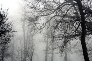 lost in the mist by saz88uk