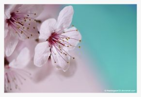 blossoms I by thestargazer23